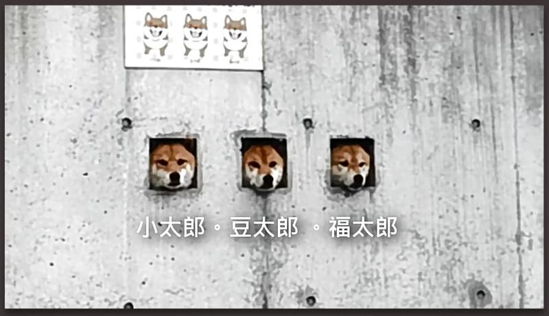 Три собаки в заборе 1.jpg