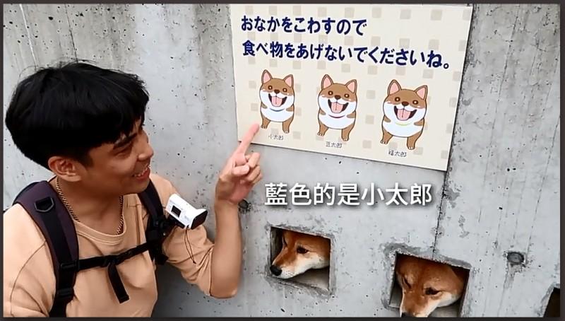 Три собаки в заборе 2.jpg