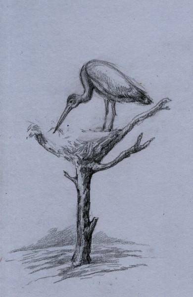 Как нарисовать чучел
