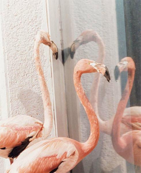 Juergen_Teller_Celine_flamingo