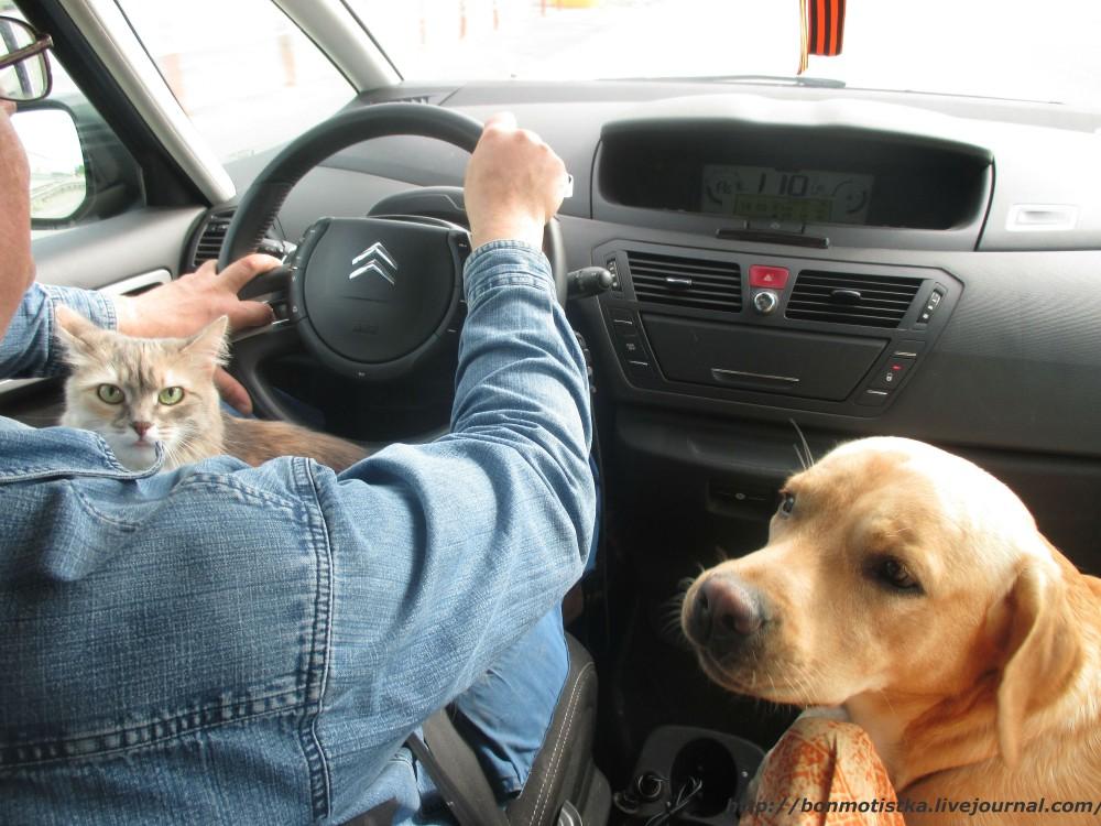 Член пса в ее попе 6 фотография