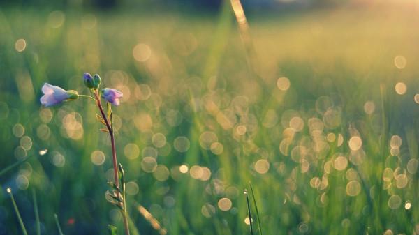 Purple-Flowers-Field-Flower