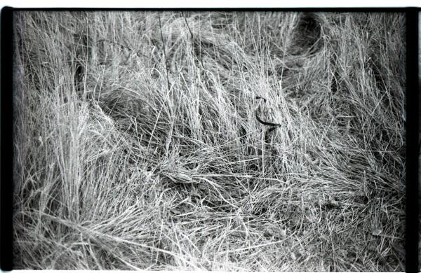лента в траве