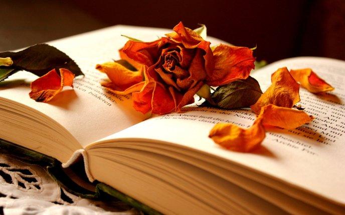 Цветок в книге  № 1488959 загрузить