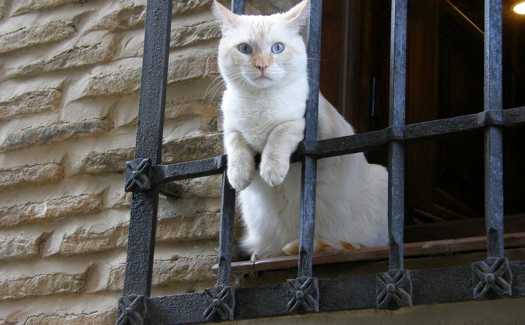 Власти Москвы посадили под домашний арест всех кошек в районе Выхино и Жулебино