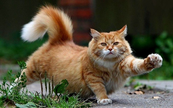 кот-на-прогулке