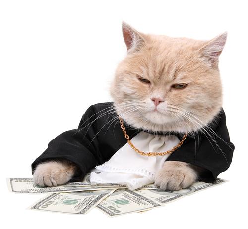 fat-cat-money