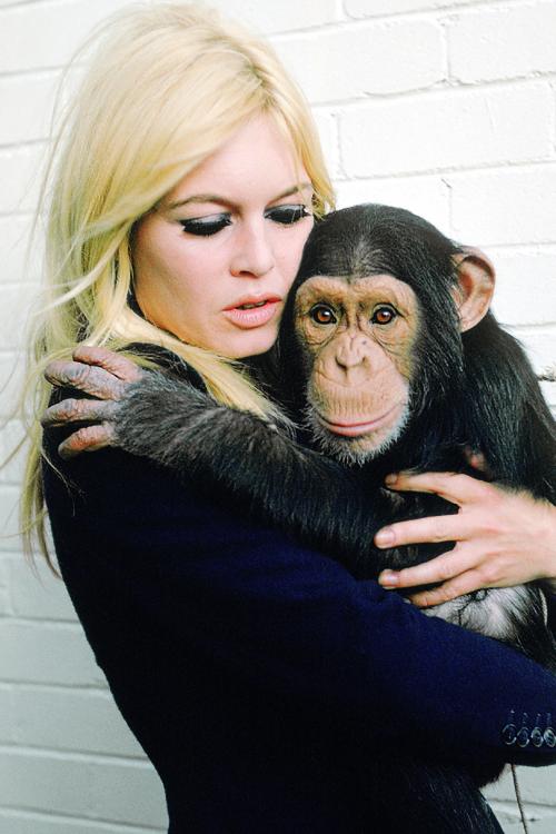 Brigitte Bardot0