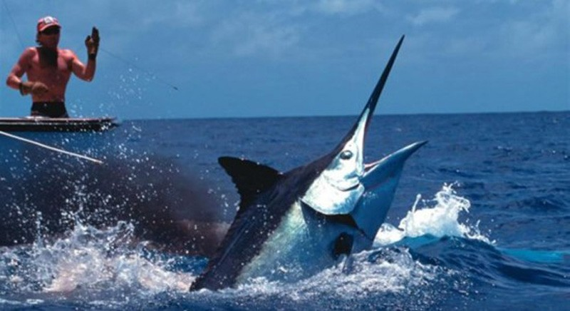 black-marlin-550x300