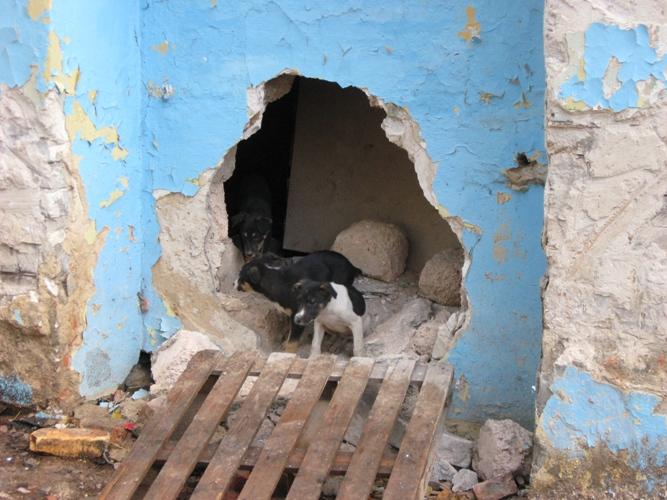 Синагога - приют для собак