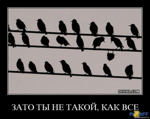 1270816942_kq4pgzydgdaj