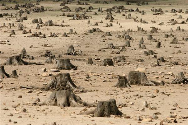 Обама лес