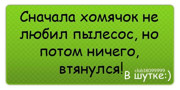 Хомяк11
