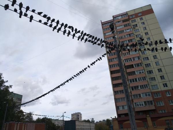grob-v-Sosnovke.jpg