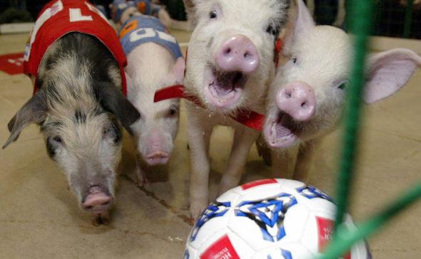 свинобол 3