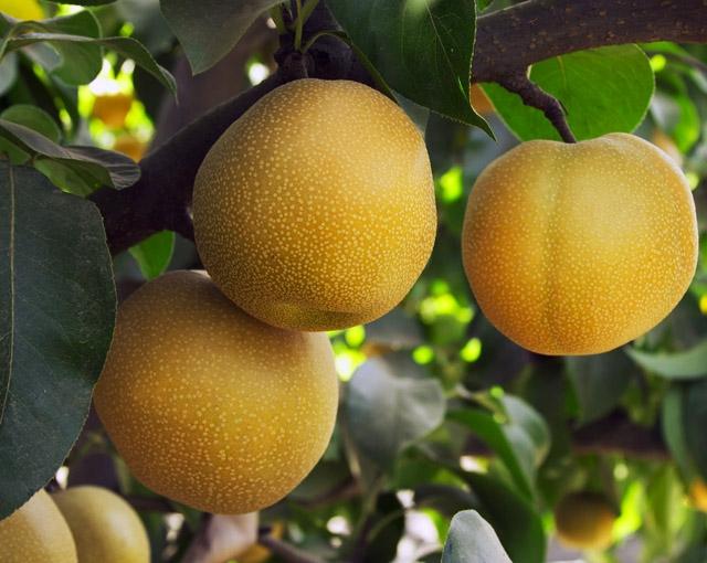 Еще один фрукт с названием из трех