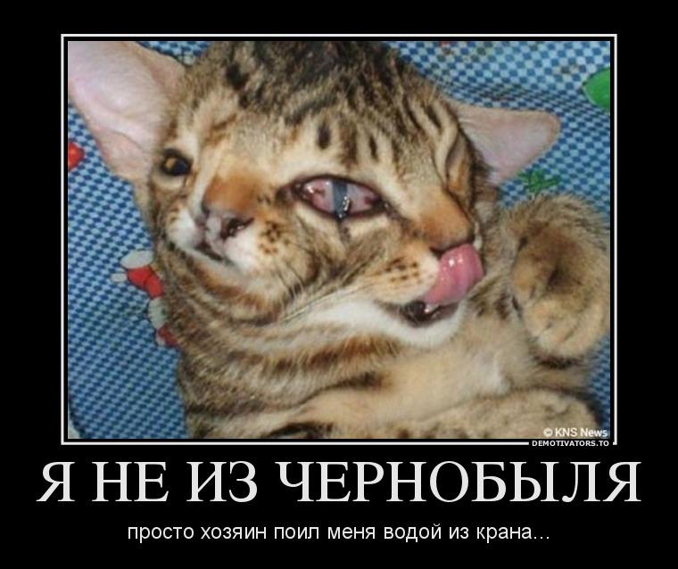 568990_ya-ne-iz-chernobyilya_demotivators_to
