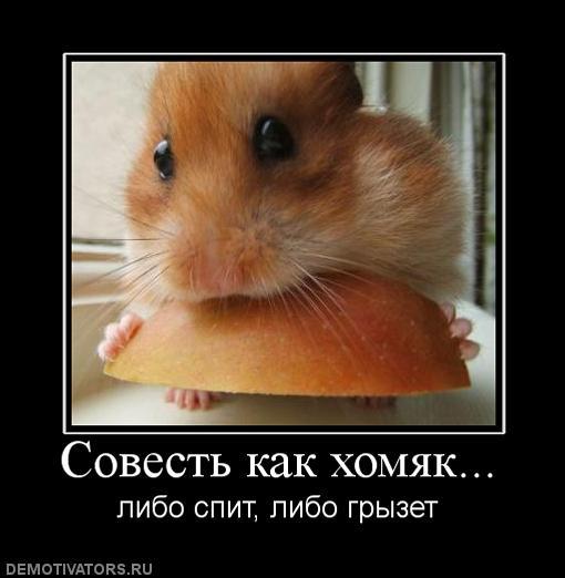 721340_sovest-kak-homyak
