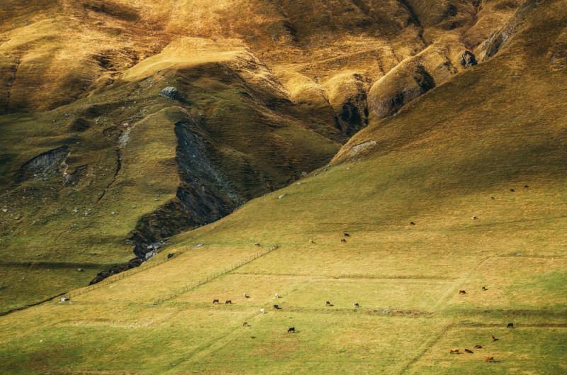 Пастбище на холме в окрестностях Ушгули, Грузия