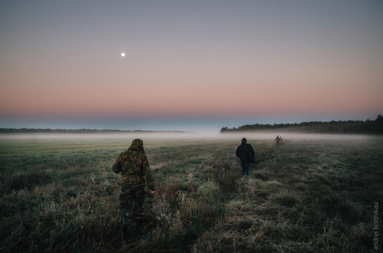 Фотоохота на оленей в Налибокской пуще, Беларусь