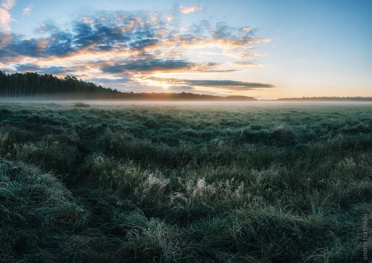 В Налибокской пуще, Беларусь