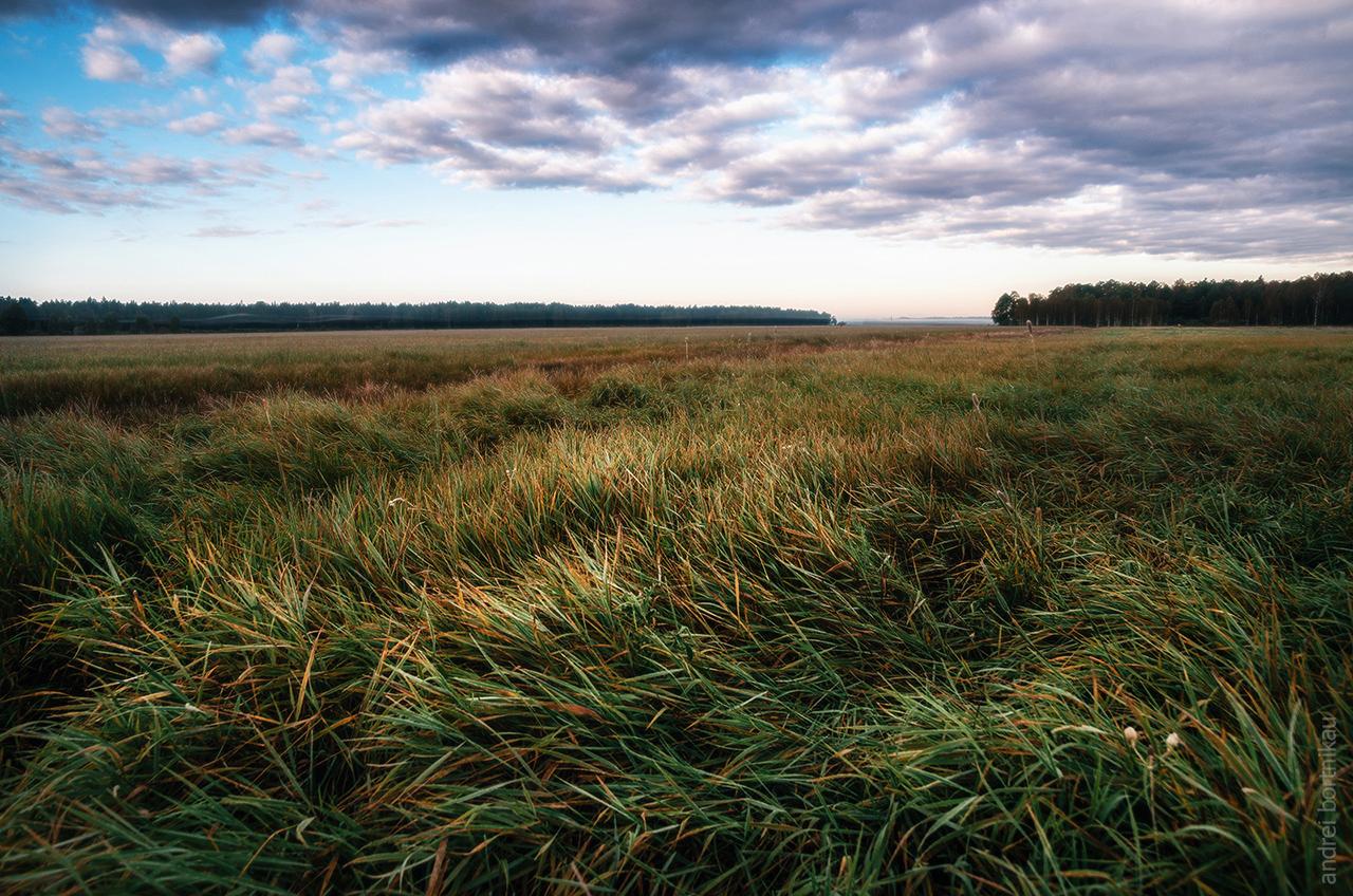 Рассвет в Налибокской пуще, Беларусь