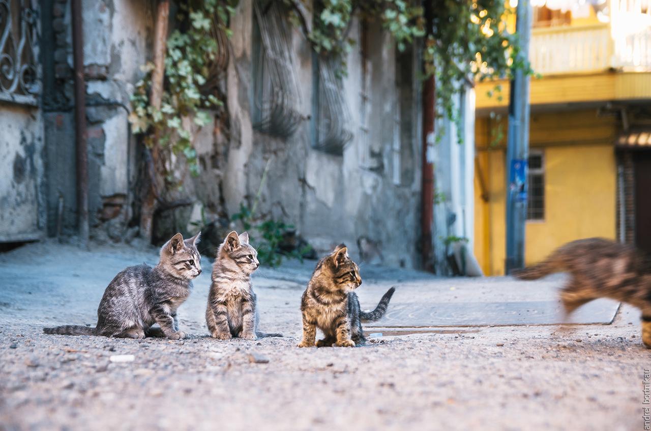 Коты Тбилиси