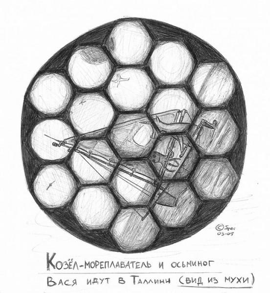 kozel i osminog - vis iz muhi
