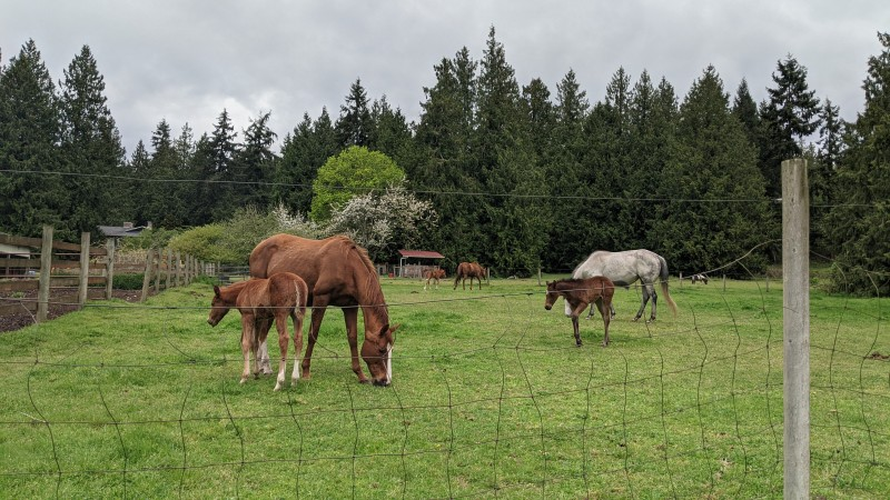 The 3 baby horses are old enough to cavort in the same pasture together!