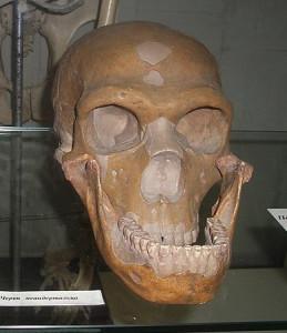 Череп неандертальца.jpg