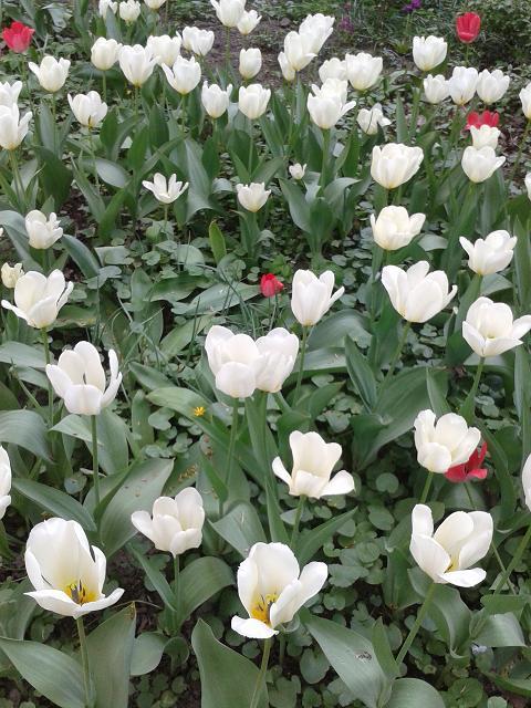 Белые цветы.jpg