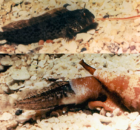 СМЕРТОНОСНЫЕ МИЛАШКИ 2 eatfish