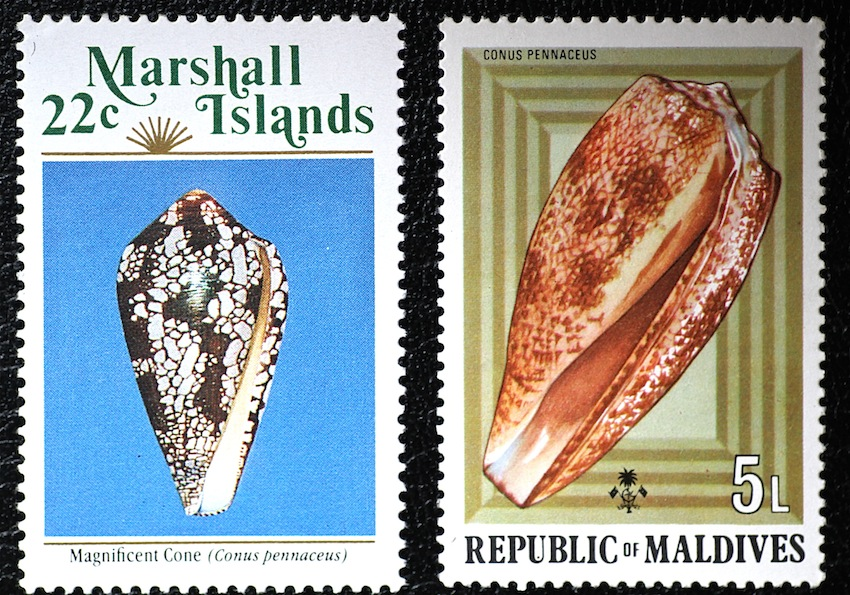 C. pennaceus poststamp