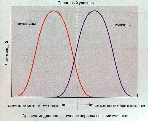 Пренатальная гормональная теория сексуальной ориентации