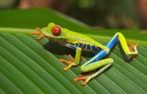 tree-frog-69813-300x193