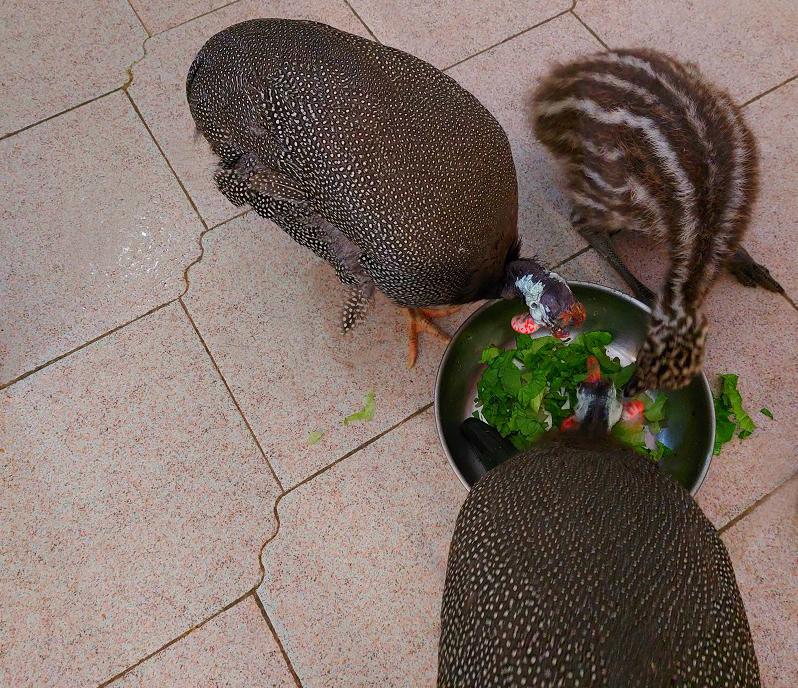 Будний день с птицами