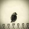 7 - bird