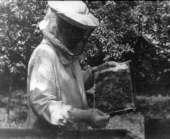 Мой дед Кравчук Петр за работой на пчелиной пасеке