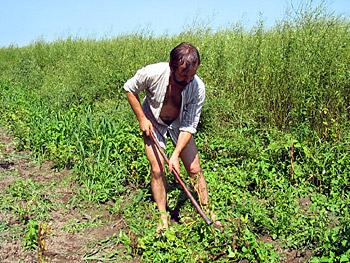 Прополка картошки на своем экологическом хуторе, 2005 г.