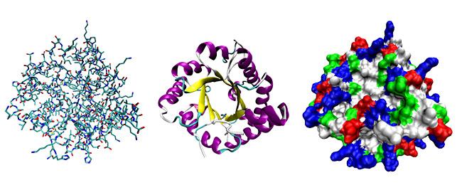 трехмерная структура белка. Изображение взято из Википедии