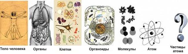 Иерархичность строения тела человека. Изображение взято с блога http://bydyschee.mirtesen.ru/blog/43938932599/Matreshka-Mirozdaniya-po-obrazu-i-podobiyu