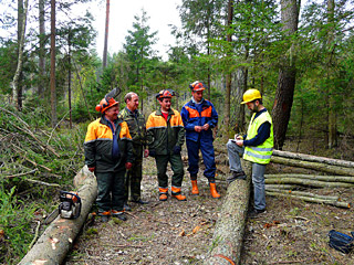 Проверка бригады лесорубов в лесхозе во время лесной сертификации FSC