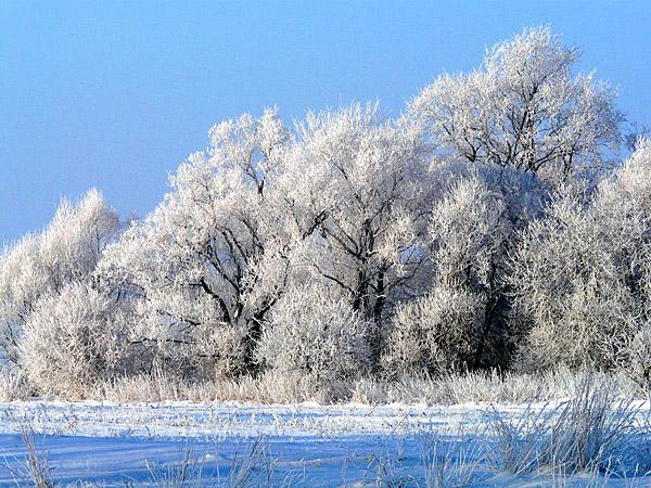 Зима 05.12.2010