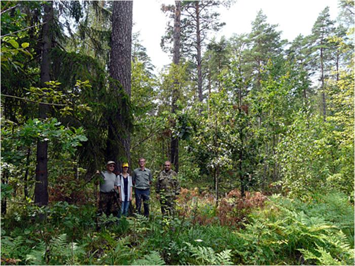 Экологически щадящая рубка леса