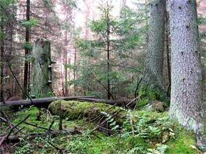 Беловежский первобытный лес - Всемирное природное наследие человечества