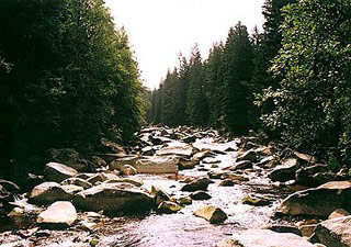 Национальный парк Шумава. Фото взято из сайта http://www.ckrumlov.cz/uk/region/soucas/t_napasu.htm