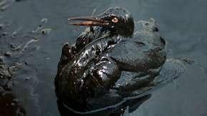 Уровень биоразнообразия Земли за 35 лет сократился на треть - WWF. Фото: www.ecoworldly.com