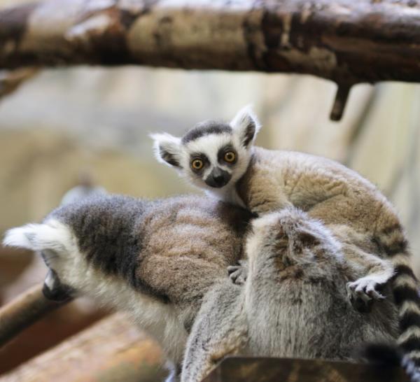 Весна в питерском зоопарке: аромат цветов и веселый гомон зверья наполняют вольеры