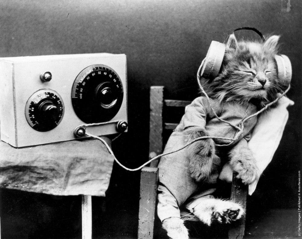 радиокот
