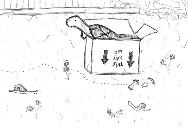 box (2).jpg